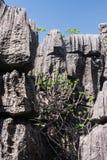 Tsingy van Ankarana stock afbeeldingen