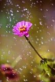 Tsiniya sous la pluie Photos libres de droits