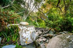 Path - Tsitsikamma National Park - Storms River - South Africa. Tsitsikamma National Park - Storms River - South Africa Royalty Free Stock Image