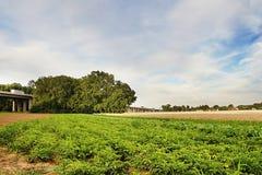Tsjechisch landschap met groene en gouden gebieden, grote bomen en een wegbrug tussen nad Ohri van dorpenbrozany, Doksany en Hos Stock Fotografie