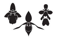 Tsjechische orchidee - silhouet Stock Afbeeldingen