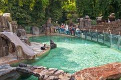 Tsjechische Republiek De mensen bekijken de bontverbinding in de dierentuin van Praag 12 Juni 2016 Stock Fotografie