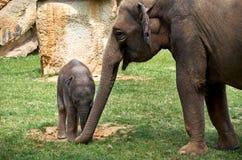 Tsjechische Republiek praag De Dierentuin van Praag Weinig babyolifant 12 juni, 2016 Stock Fotografie