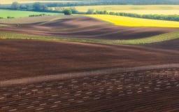 Tsjechische Republiek Zuid- Moravië Gebieden onder wijnstokken en raapzaadgebied royalty-vrije stock afbeeldingen