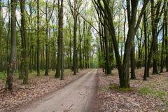 Tsjechische schitterende bossen stock afbeeldingen