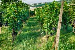 Tsjechische wijngaarden van Moravië royalty-vrije stock afbeelding