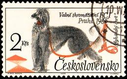 TSJECHO-SLOWAKIJE - CIRCA 1965: een zegel, in Tsjecho-Slowakije wordt gedrukt, toont een Afghaanse Hond die stock illustratie