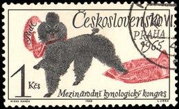 TSJECHO-SLOWAKIJE - CIRCA 1965: een zegel, in Tsjecho-Slowakije wordt gedrukt, toont een Poedelhond, Congres dat van reeks het In stock illustratie