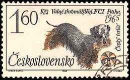 TSJECHO-SLOWAKIJE - CIRCA 1965: een zegel, in Tsjecho-Slowakije wordt gedrukt, toont een Tsjechische terriërhond die vector illustratie