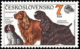 TSJECHO-SLOWAKIJE - CIRCA 1990: zegel, in Tsjecho-Slowakije wordt de gedrukt, toont honden Arrogante Koning Charles Spaniel, Cock royalty-vrije illustratie