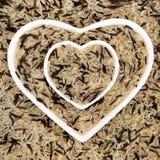 Tęsk Zbożowy Dziki Rice Fotografia Royalty Free