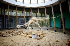 TSKALTUBO, ΓΕΩΡΓΙΑ - 18 ΝΟΕΜΒΡΊΟΥ 2016: Σκελετός του δεινοσαύρου, που βρίσκεται στην επιφύλαξη φύσης Sataplia κοντά στην πόλη Kut Στοκ Φωτογραφίες
