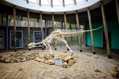 TSKALTUBO, GEORGIA - 18-ОЕ НОЯБРЯ 2016: Скелет динозавра, устроенный в заповеднике Sataplia около городка Kutaisi, Georgia Стоковые Фото