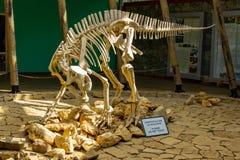 TSKALTUBO, GEORGIA - MARCH 19, 2018: Skeleton of dinosaur, located in Sataplia Nature Reserve near Kutaisi town, Georgia stock photos