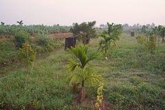 ?tskilligt croping system, durianfrukt att v?xa samman med arecamutter royaltyfria foton
