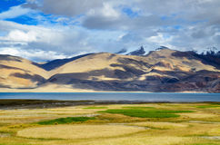 Tso Moriri lake in Indian Himalayas. With wheat fields on the foreground in Ladakh, India, altitude 4600 m Royalty Free Stock Images