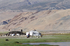 Tso Moriri nomadic camp Royalty Free Stock Image