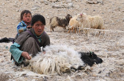 Tso Moriri nomadic family Stock Photo