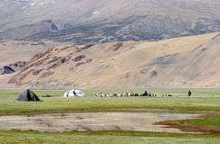 Tso Moriri nomadic tent camp Stock Images