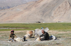 Tso Moriri nomads Royalty Free Stock Photo