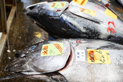 Tsukiji Fish Market. Fresh tuna fish at Tsukiji fish market in Tokyo, Japan. With an annually estimated turnover of 5.5 billion dollars and more than 60.000 Royalty Free Stock Images