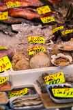 Tsukiji Fish Market in Japan. Stock Image