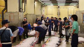 Tsukiji Fish Market stock video footage