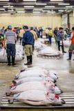 Tsukiji Fish Market Royalty Free Stock Photo