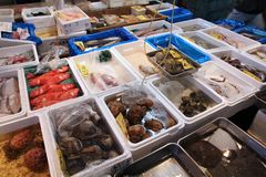 Tsukiji Fish Market Stock Photos