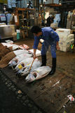 Tsukiji fishmarket Stock Photo
