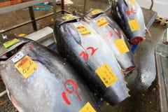Tsukiji fiskmarknad Royaltyfria Foton