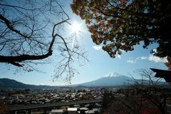 TSUKIJI Tokyo, Giappone - novembre 13,2017: Ostrica e salse fresche, conchiglia, frutti di mare popolari del Giappone Vista del M fotografie stock libere da diritti