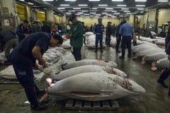 Tsukiji tonfiskauktion i Tokyo, Japan Arkivbild