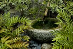 Japanese Fountain. A Japanese garden fountain with ferns and a rock basin Royalty Free Stock Photos