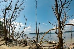 Tsunami po skutków Fotografia Royalty Free