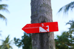 Tsunami warning sign on the palm in Indonesia Royalty Free Stock Photo