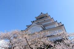 Tsuruga Castle surrounded by hundreds of sakura trees Stock Photos