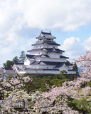 Tsuruga Castle surrounded by hundreds of sakura trees Royalty Free Stock Photos