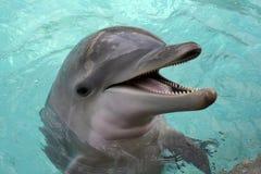 tät delfinnäsa för flaska upp Arkivfoto