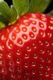 tät ny jordgubbe upp Royaltyfri Bild