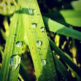 täta daggliten droppe gräs perfekt övre vatten för leafmorgonen Royaltyfri Foto