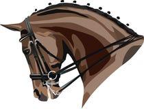 Tête de cheval de Dressage Images libres de droits