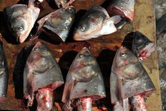 Tête de poisson cru Photo libre de droits