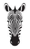 Tête de zèbre sur le fond blanc Logo de zèbre Illu de vecteur Image libre de droits