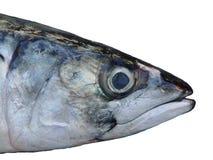 Tête des poissons Image libre de droits