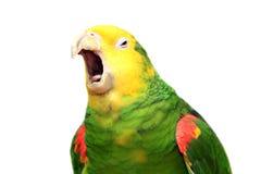 Tête jaune Amazone sur le blanc Image libre de droits