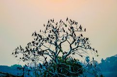 Tree with birds. A ttee full packed with birds royalty free stock image