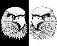 Têtes de faucon en noir et blanc Photos libres de droits
