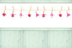 Têtes de fleur fuchsia Photographie stock