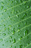 Ttexture of green leaf after rain. The detail of green leaf texture after rain Stock Image